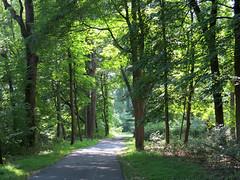 humid path