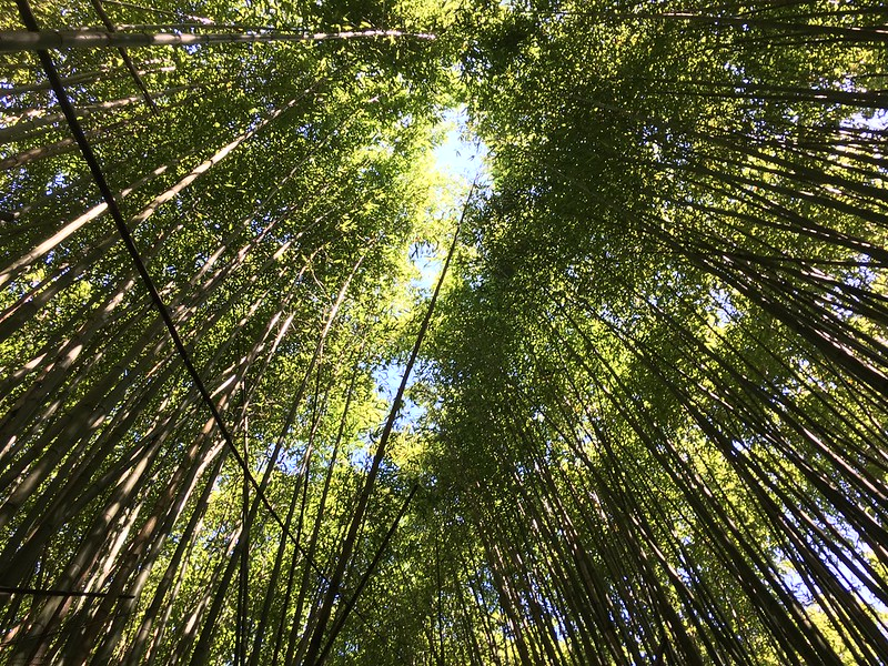 粟園駐在所的竹林