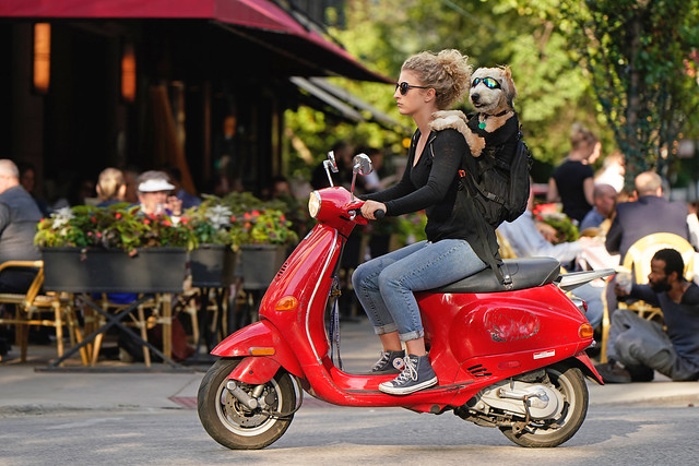 How Does a Dog Ride a Motorscooter?