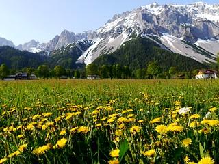 Ramsau am Dachstein, Frühling / Springtime