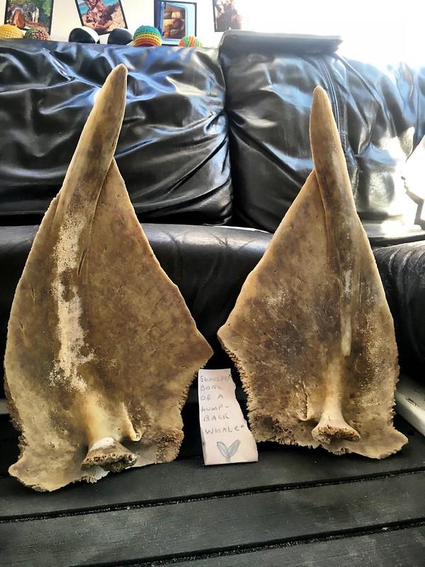 DB's 'humpback whale' bones.