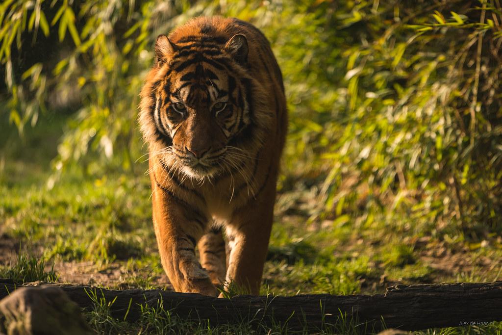 Crouching Tiger, Hidden Dragon.