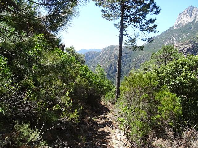 Descente du Chemin de Paliri : à l'approche du plateau de cistes/bruyères