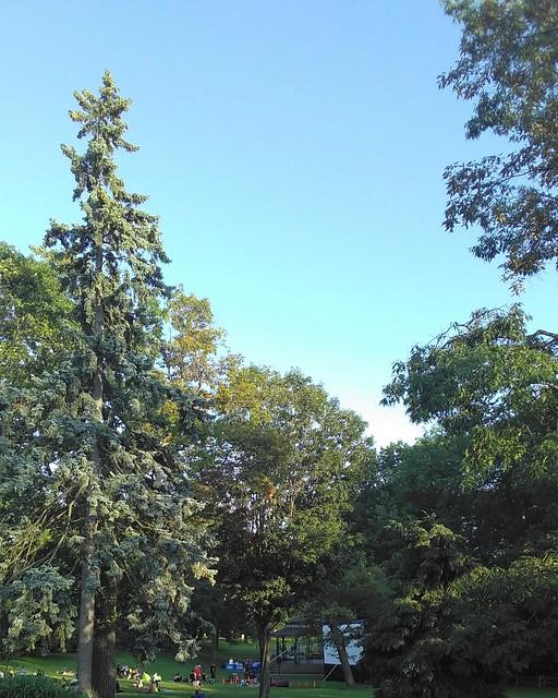 Green Kew Gardens under blue sky #toronto #beaches #kewgardens #park #green #tree #blue #sky #evening
