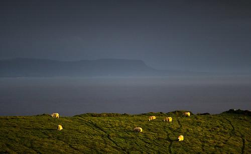donegal wild atlantic glourious sunset light way ireland sheep landscape best evening moody digital water marked tracked 2c 2cimage eire irelandwildatlanticway nature europe bay sea hugh dempsey