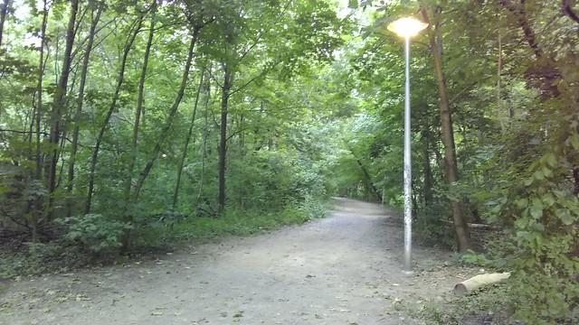 Guiding light #toronto #casaloma #nordheimerravine #forest #path #lights #latergram