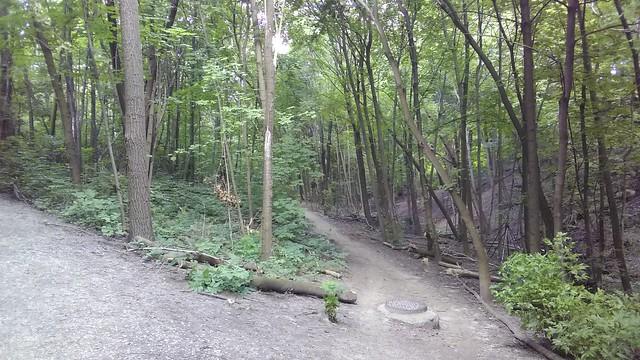Paths diverge #toronto #casaloma #nordheimerravine #forest #latergram