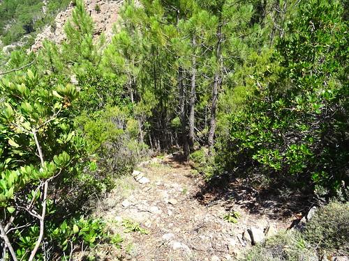 Fin du nouveau petit lacet créé à la sortie de la forêt sous le col 750m
