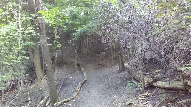 Underbrush #toronto #casaloma #nordheimerravine #latergram