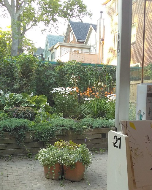 Back garden, Book City #toronto #beaches #gardens #bookcity #bookstores #evening