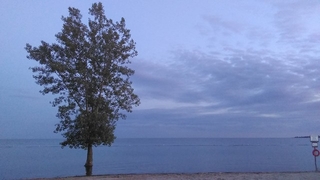 High waters #toronto #sunnysidebeach #beach #flooding #lakeontario #tree #blue
