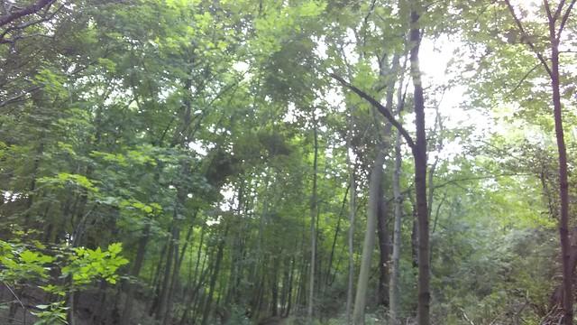 Canopy (2) #toronto #casaloma #nordheimerravine #forest  #canopy #latergram