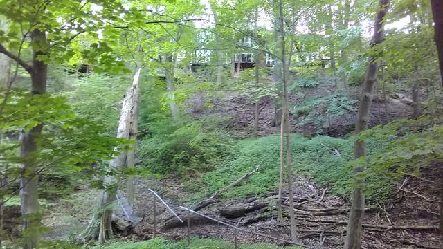 Up through the underbrush #toronto #casaloma #nordheimerravine #forest  #canopy #latergram