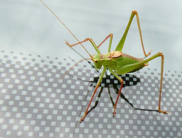 An interesting critter!