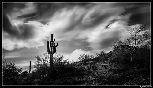 arizona buckeye cacti cactus clouds cloudscape cloudy desert hdr kenmickelphotography landscape longexposure longexposurephotography outdoors plants saguaro sky skylineregionalpark blackandwhite nature photography unitedstatesofamerica