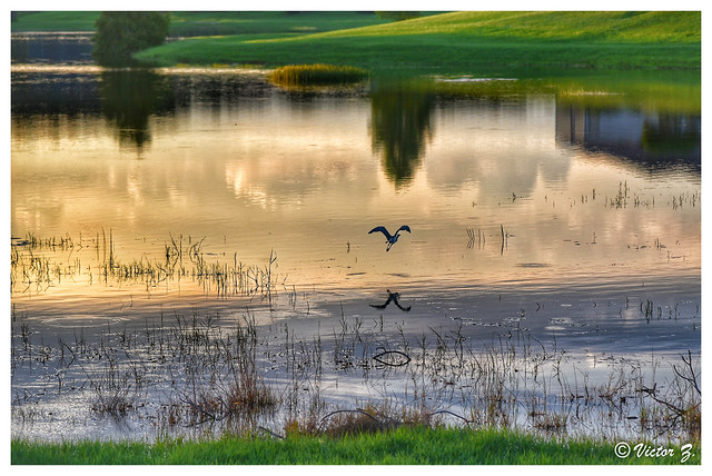 Heathrow Lake Mary Florida -38