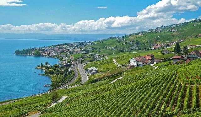 SWITZERLAND - Leman lake and Lavaux vineyard