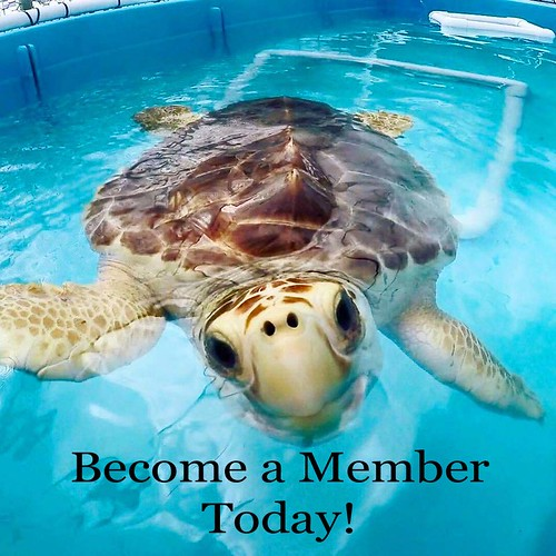Become a Member copy