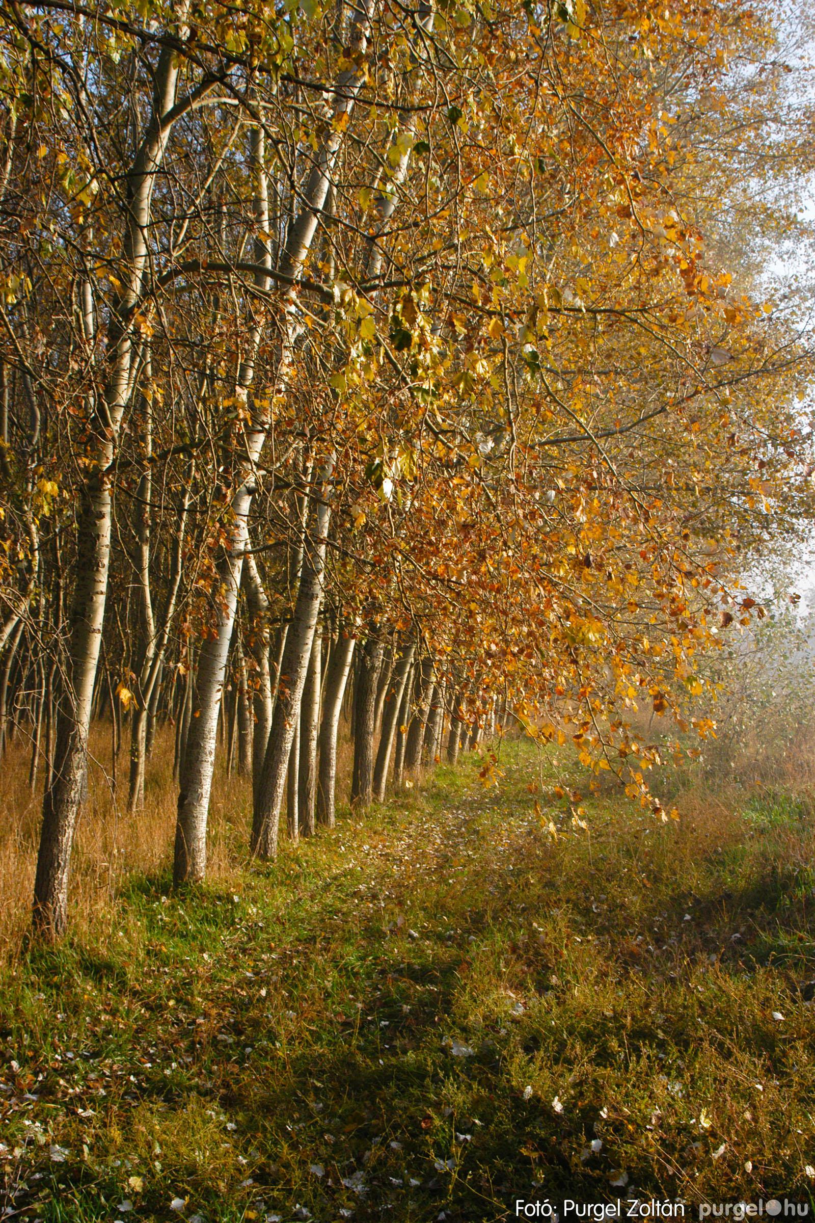 2003.11.09. 014 Őszi fények a Csordajáráson - Fotó:PURGEL ZOLTÁN© DSC_0036q.jpg