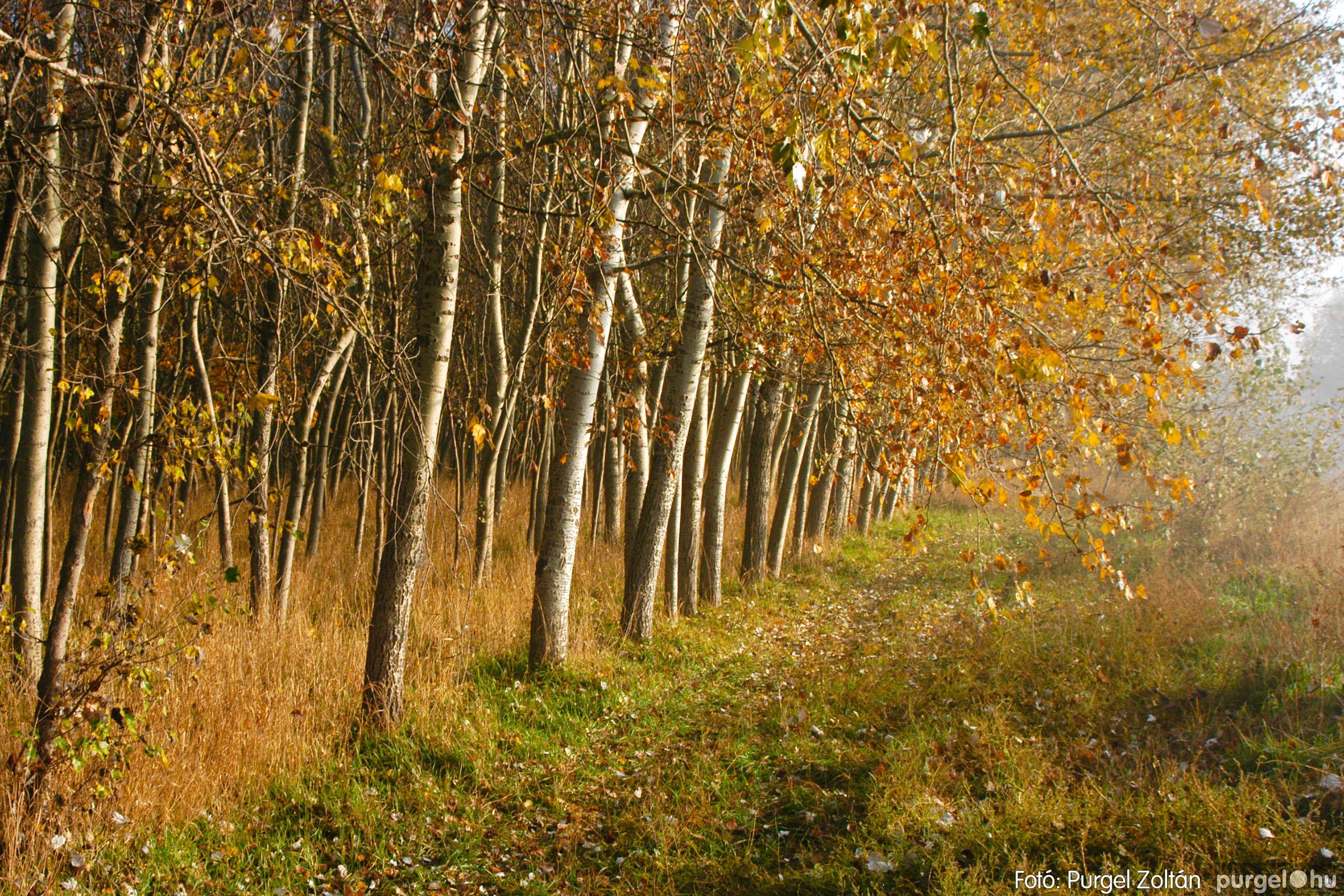 2003.11.09. 013 Őszi fények a Csordajáráson - Fotó:PURGEL ZOLTÁN© DSC_0035q.jpg