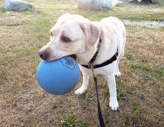 Gracie standing with ball