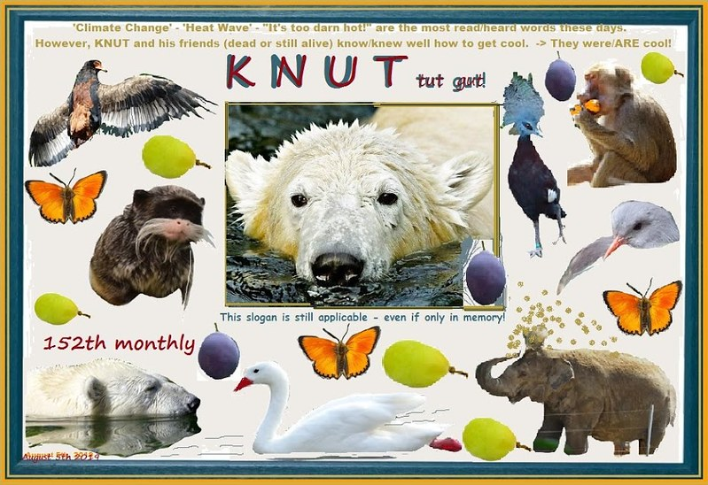 KNUT_152ndMonthly_5August2019_COLLAGE_Di_17h00_190730