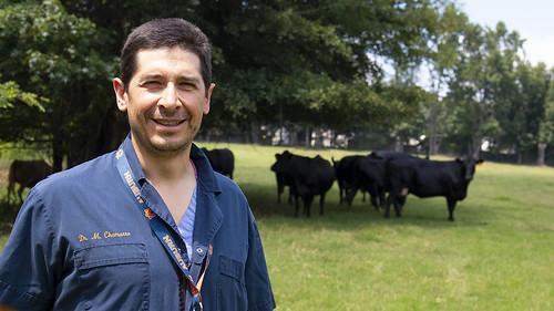 Manuel Chamorro standing near calves.
