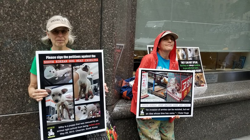 New York, South Korean Consulate General, 'Boknal' Demonstration for the South Korean Dogs and Cats (Day 2) – July 22, 2019 Organized by The Animals' Battalion