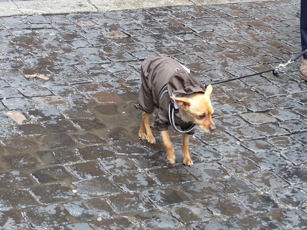 chien congelé