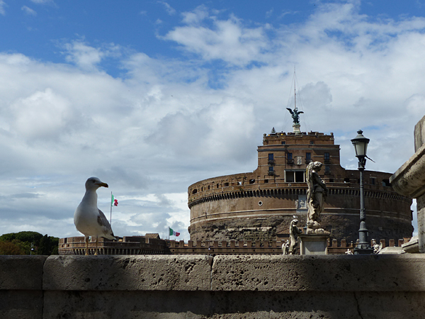 mouette et château de saint ange