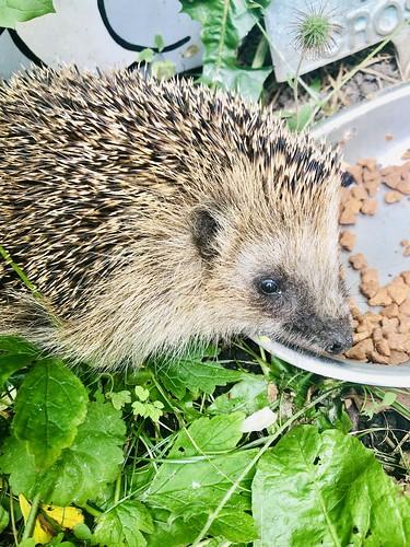 welcome hedgehog 2019 💚, july 2019