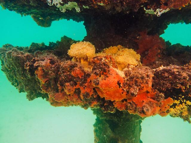 Swarming With Life  at Navarre Beach Marine Sanctuary