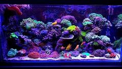 @aquasoft.es Photo #fish #reef #aquarium #tankfish #marine #reefcentral