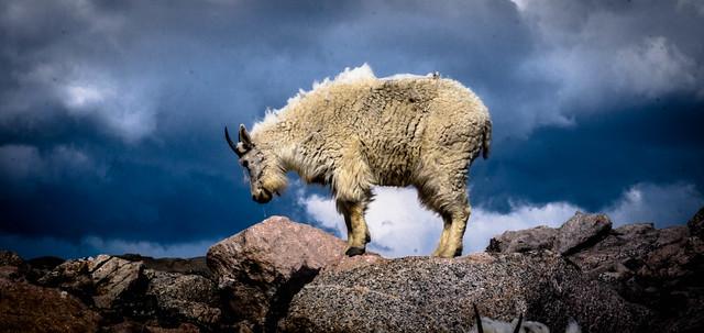 Colorado critters 3