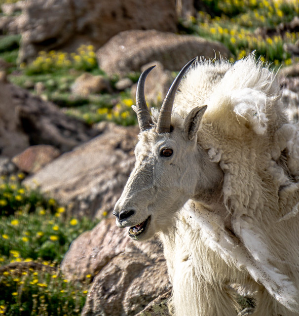 Colorado critters 1
