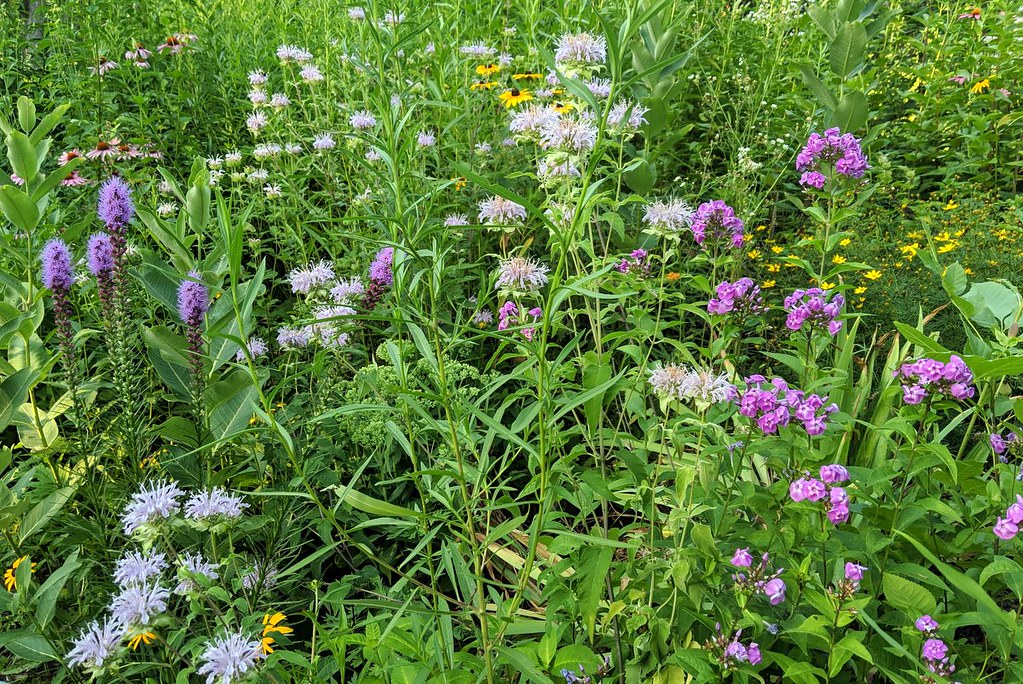10-foot-wide section of a pollinator garden with purple coneflowers at top left, blazingstar at bottom left, bee balm in the center, and phlox at the right.