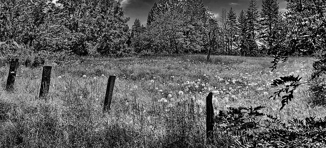 Fence line in the Sierra Madre foothills: HFF! (+1)