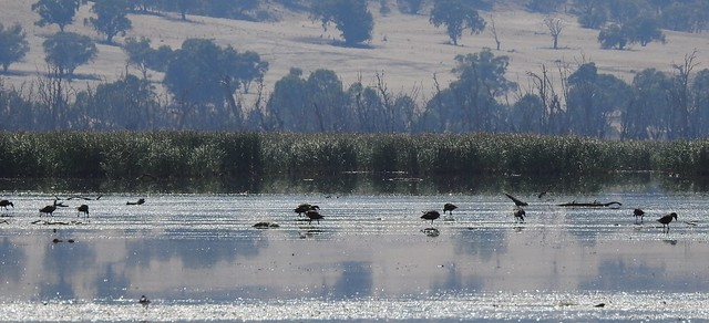 Winton Wetlands last year