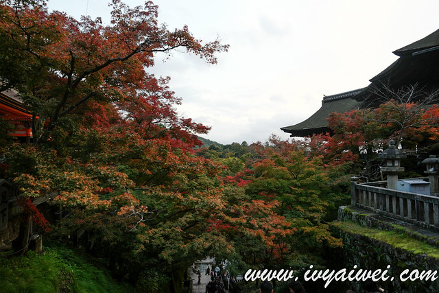 things to do in Kyoto (autumn) (97)