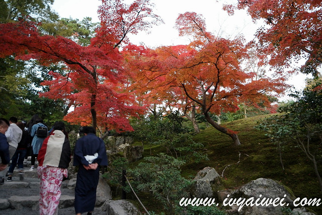 things to do in Kyoto (autumn) (21)