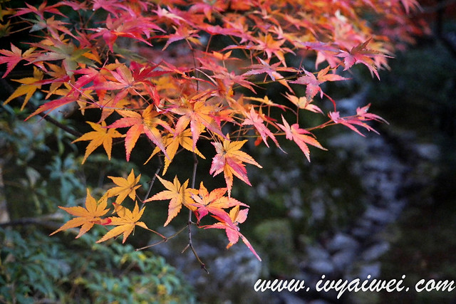 things to do in Kyoto (autumn) (22)