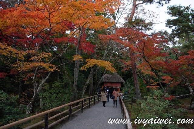 things to do in Kyoto (autumn) (20)