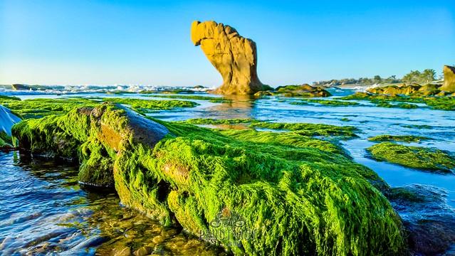 Phượt Cổ Thạch - Bãi biển rêu xanh ngoài hành tinh 44