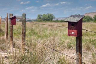 Canadian Badlands Bird Nestboxes #136