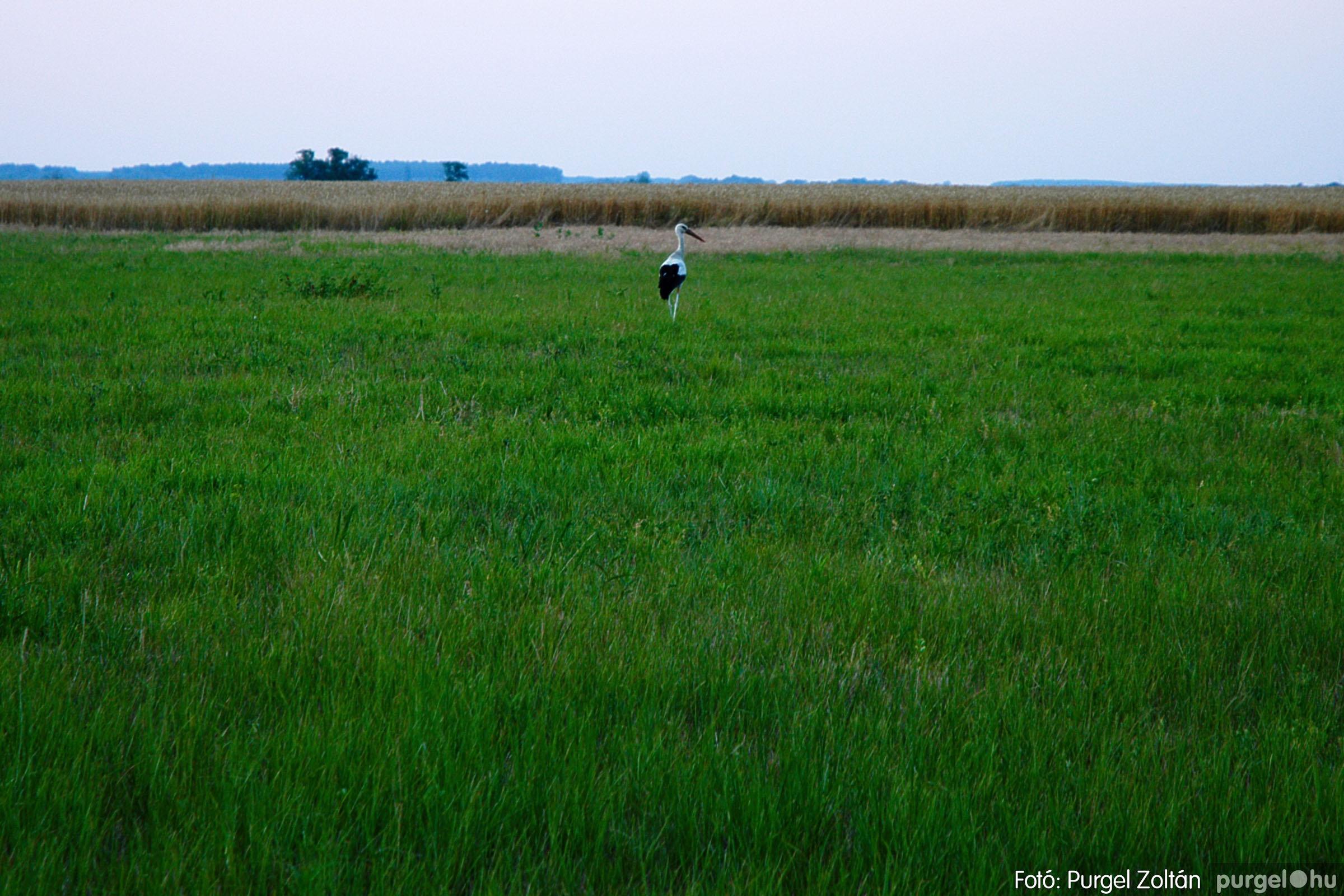 2004.07.22. 001 Nyáresti séta a Lándor-tó környékén - Fotó:PURGEL ZOLTÁN© DSC_0002q.jpg