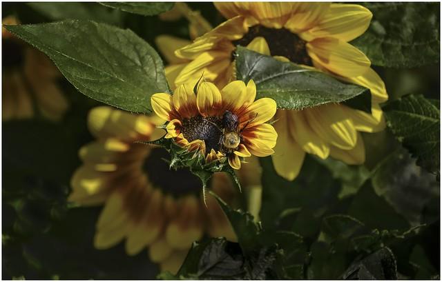 Bee Having Breakfast