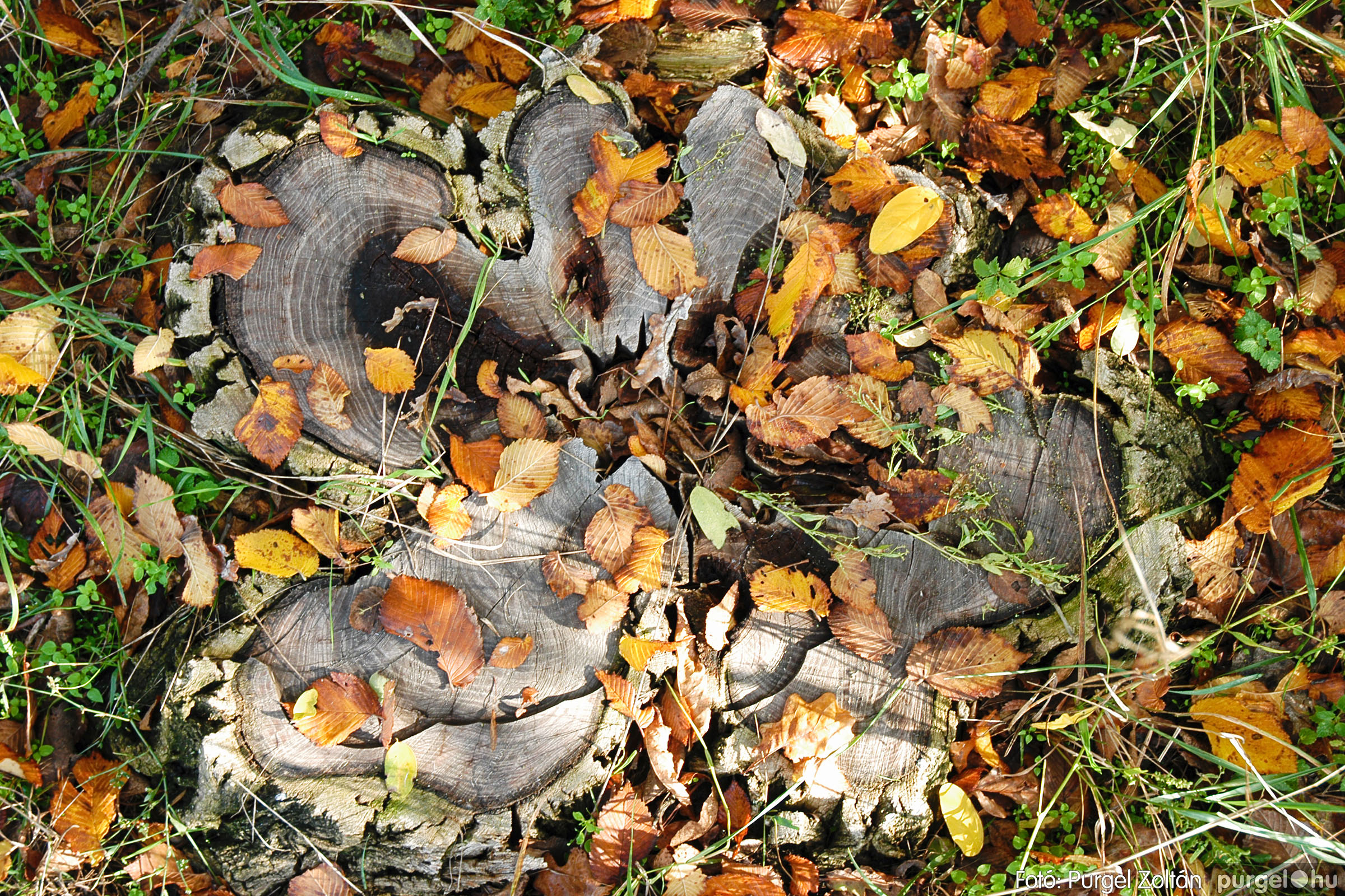 2004.10.26. 006 Az ősz színei Szegváron - Fotó:PURGEL ZOLTÁN© DSC_0021q.jpg