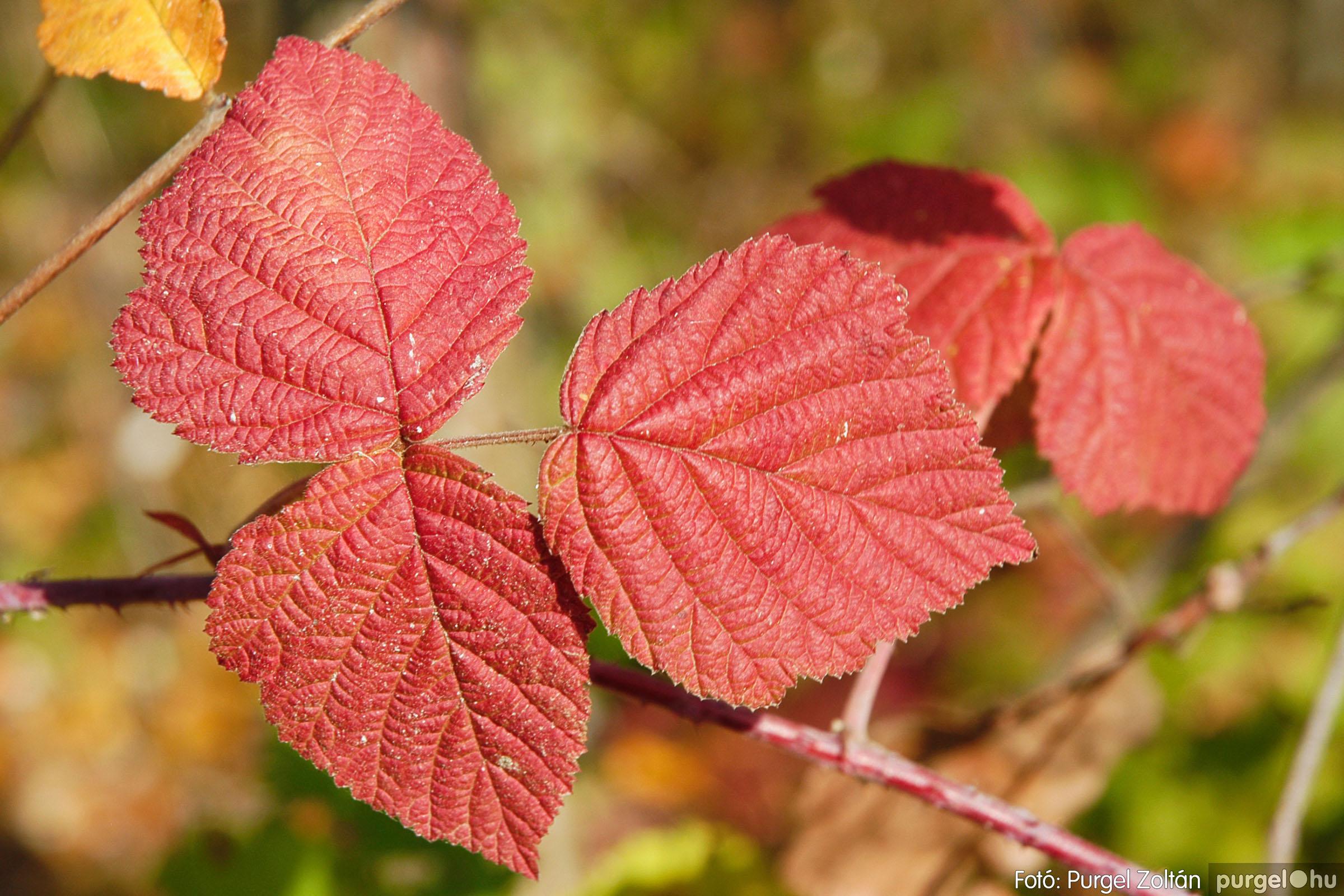 2004.10.26. 004 Az ősz színei Szegváron - Fotó:PURGEL ZOLTÁN© DSC_0017q.jpg
