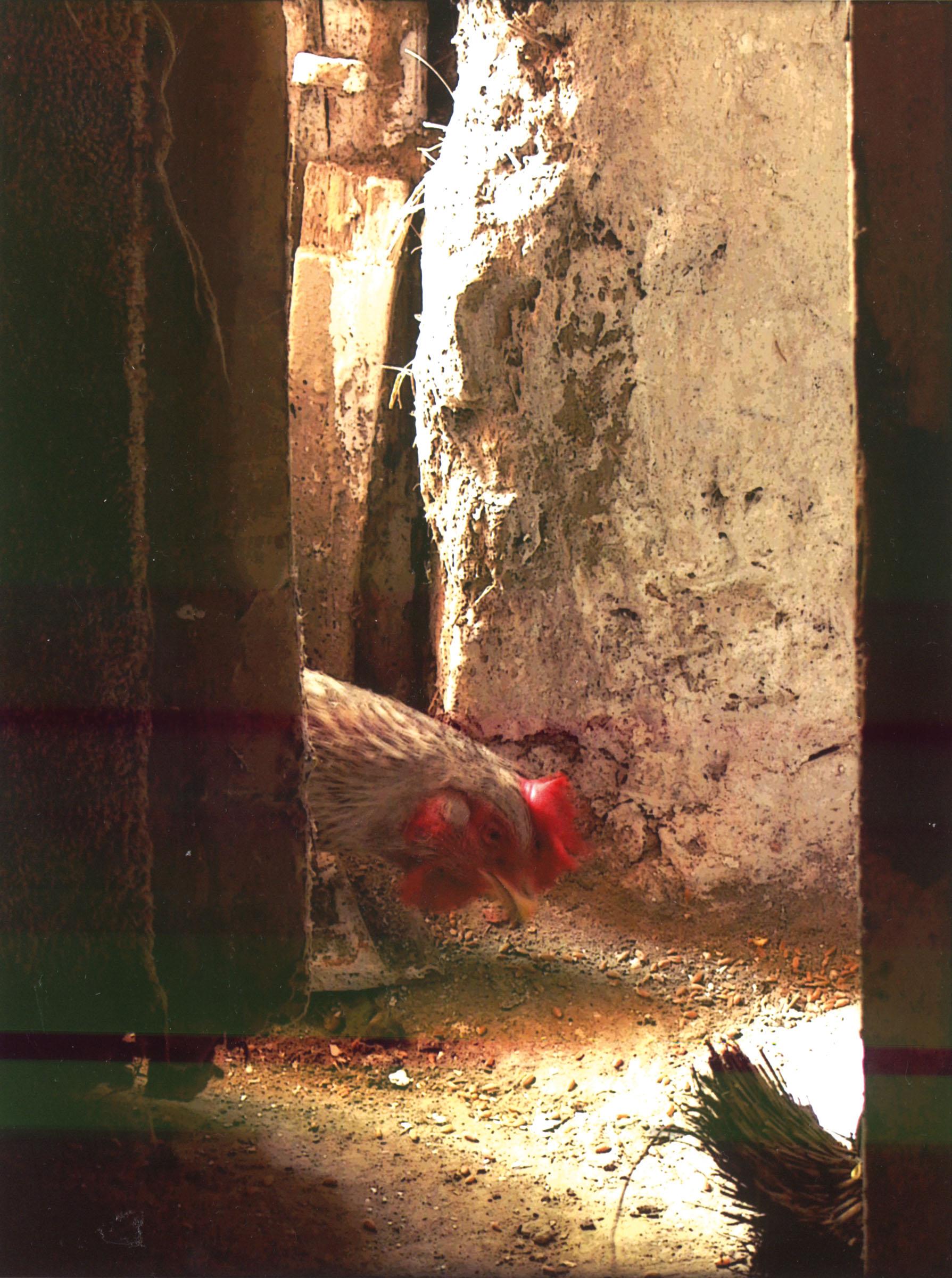 2004.09.18. Hétköznapok fotópályázat - Szita László - Magevő.jpg