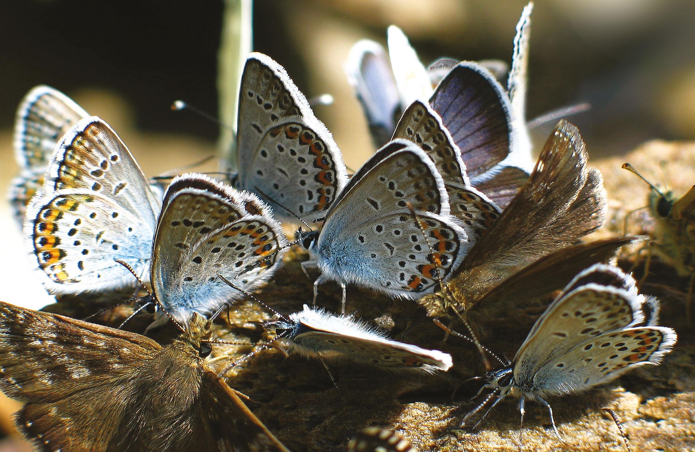 2004.09.18. Hétköznapok fotópályázat - Magyar Antal - Kék pillangók.jpg